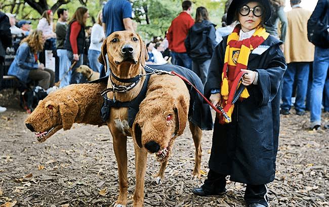Dog Costume Parade 1